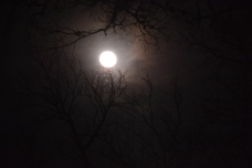 Lovely moon at Insects Unlocked. Photo by Emlyn Resetarits.