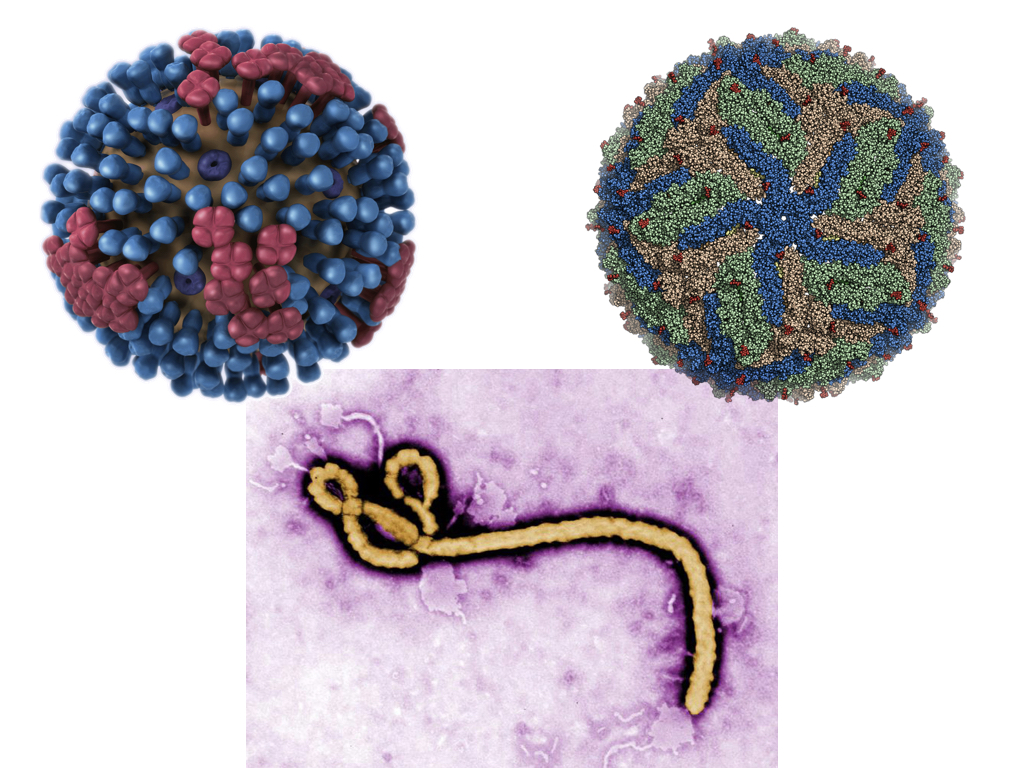 https://scienceunderthestars.files.wordpress.com/2018/01/viruses.jpeg