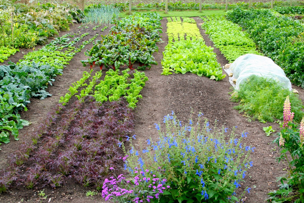Photo credit: http://patrickwhitefield.co.uk/permaculture-gardening-from-seed-to-table/